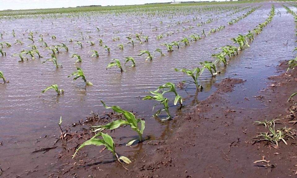 Buenos Aires: afirman que hay 8 millones de hectáreas afectadas por inundaciones