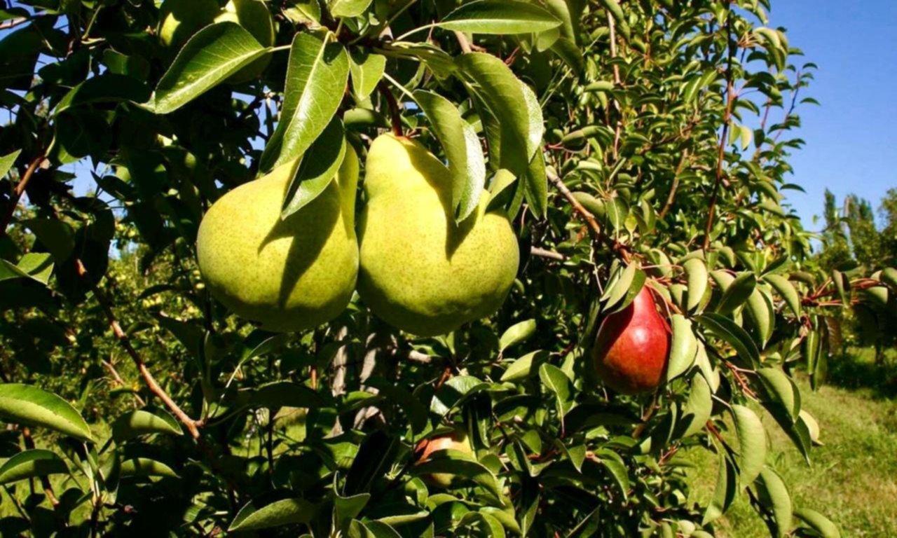 Buscan más beneficios para el sector frutícola
