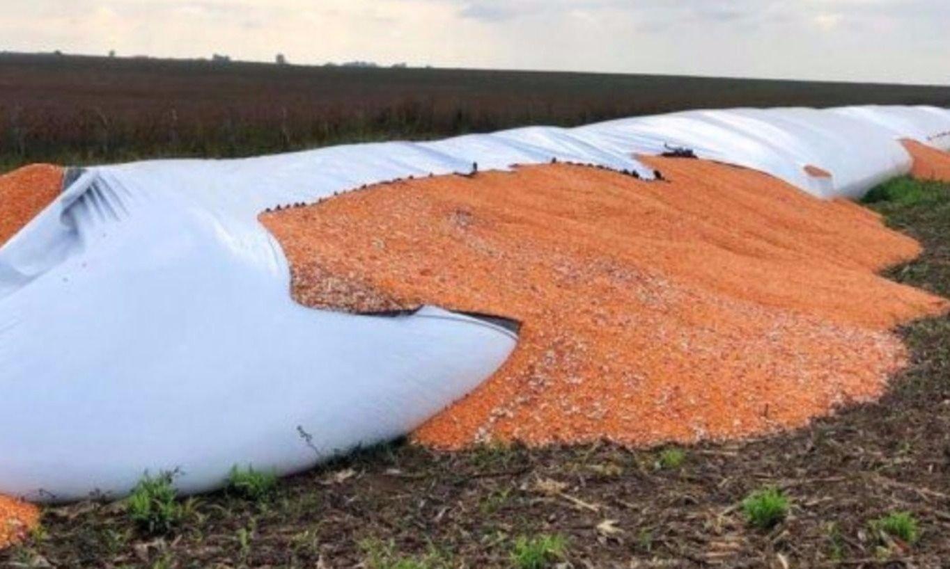 """El sector agroindustrial apoya el proyecto de Massa contra el """"vandalismo rural"""""""
