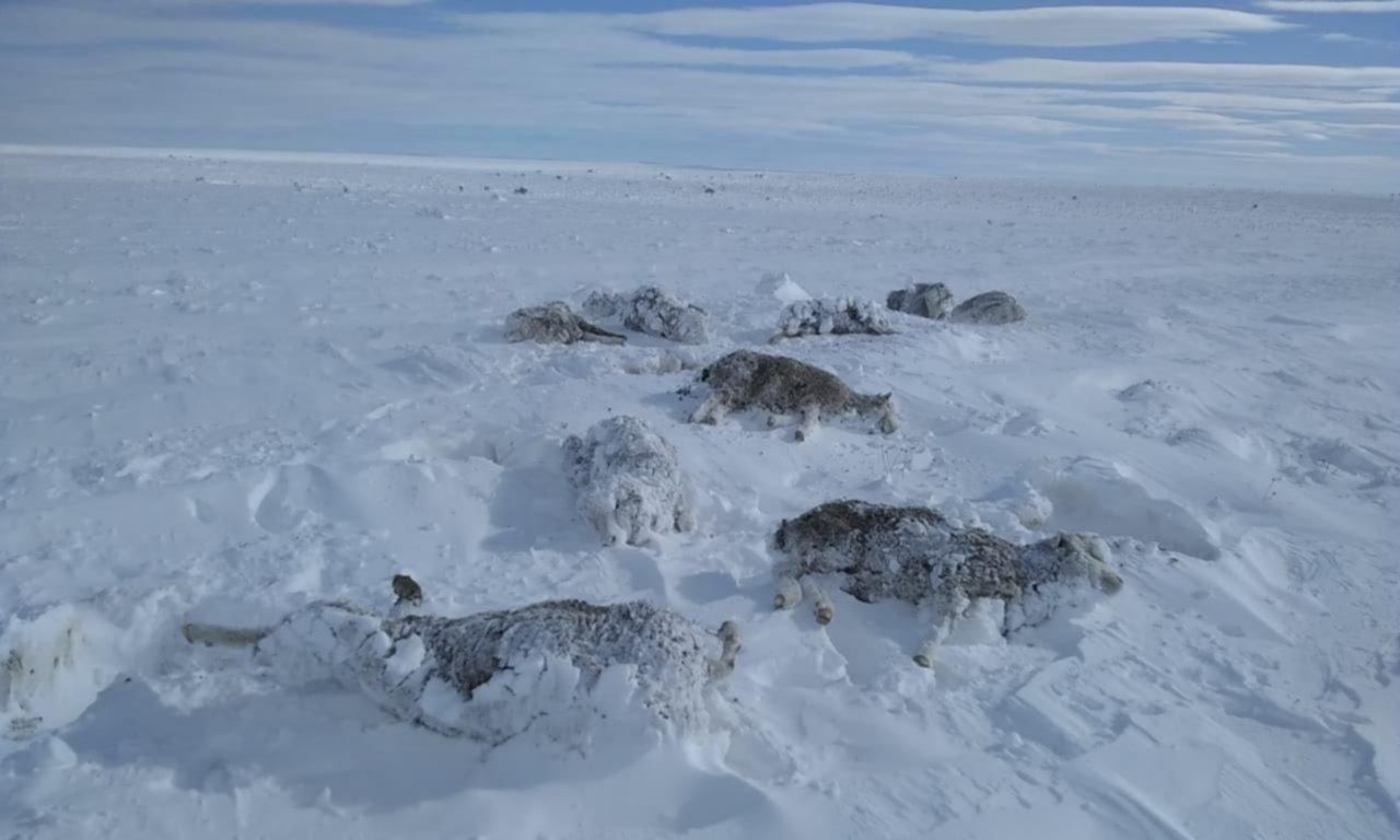 Ganadería en jaque por la nieve: perspectiva crítica en plena pandemia