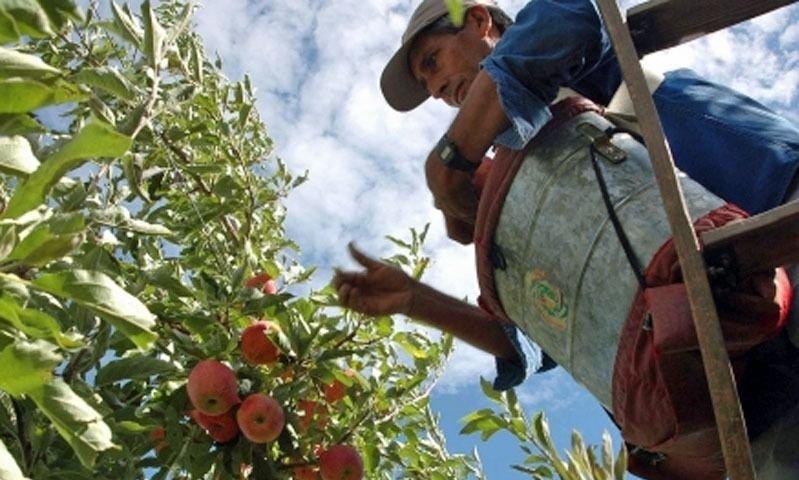 La llegada de 20 mil trabajadores golondrina inquieta a intendentes patagónicos